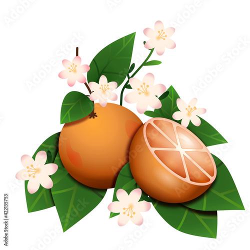 Owoce pomarańczy na gałązce z kwiatami i liśćmi. Botaniczna kompozycja egzotycznych owoców.
