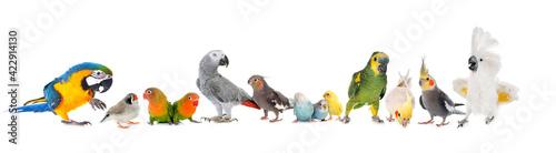 Canvas-taulu group of birds
