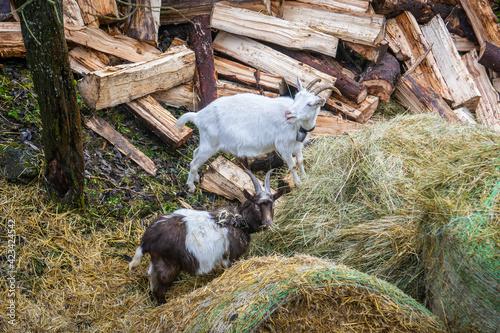 Kozy, Dolina Kwaczańska, młyny, Słowacja