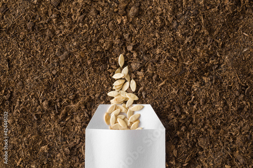 Canvas Print One white opened paper pack of dry cucumber seeds on fresh dark soil background
