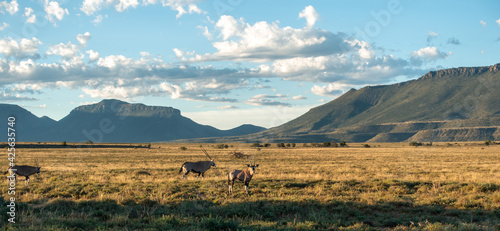 Obraz na płótnie View of the arid mainland in the Cape Town region, Anysberg Nature Reserve, Sout
