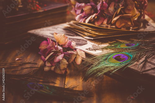 Fototapete Old book and photo album, dried flowers and peacock feather eye in vintage style
