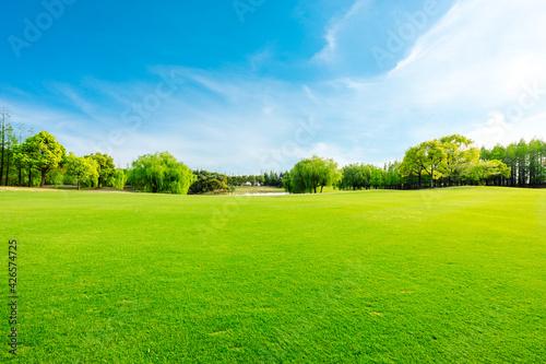 Slika na platnu Green grass and forest in spring season.