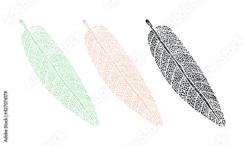 Fotografia Botanical drawing print of a sage leaf
