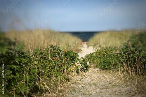 Slika na platnu Narrow sandy passage to beachside