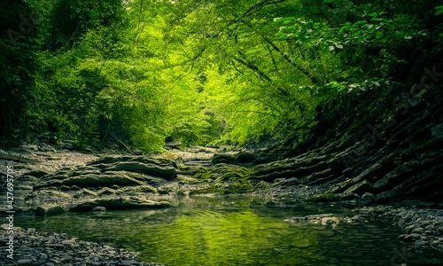 Fotografia emerald edge
