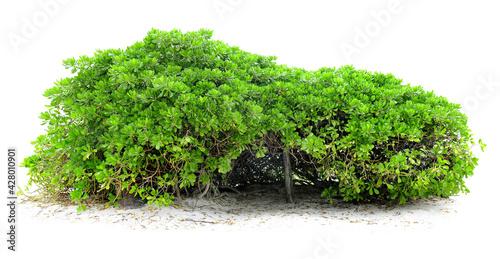 Slika na platnu Cut out green hedge
