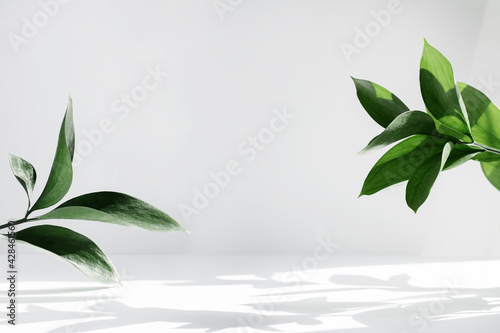 Creative layout of colorful riskus leaves on a white background in the rays of the sun, with shadows. Minimal summer exotic concept with copy space.