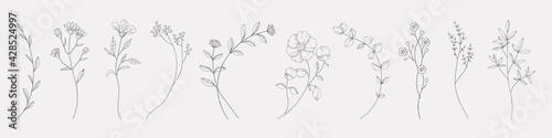 Fotografia Hand drawn herbs
