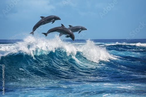 Canvas two dolphins jumping