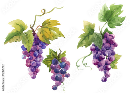 Canvastavla Beautiful set with hand drawn watercolor tasty summer grape fruits