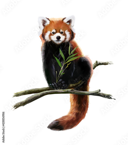 Fotografia Red panda sits on a branch. Watercolor drawing
