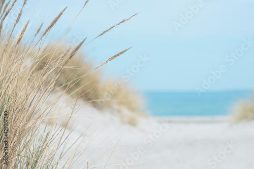 Baltic sea dunes over blue coastline background Fotobehang