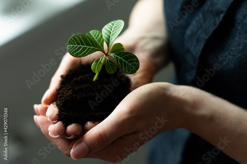 Photo environment Earth Day In the hands of trees growing seedlings