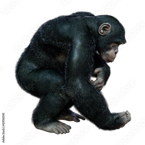 Canvastavla 3D Rendering Chimpanzee on White