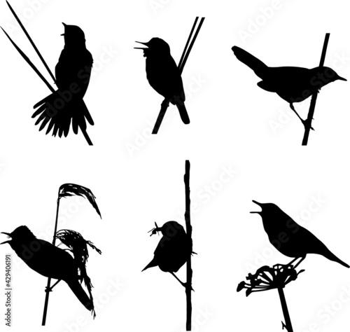 Fotografie, Obraz British Reed and Grasshopper Warblers