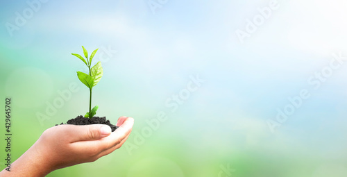 Fotografie, Obraz World environment day concept: hand holding tree over blurred natural background
