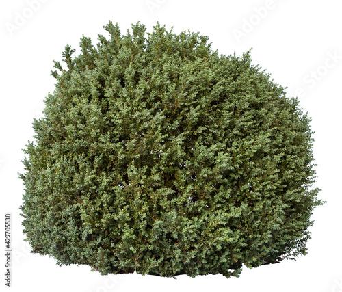 Fotografia, Obraz Green bush isolated on white background. Cutout plant