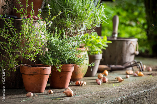 Carta da parati Homegrown herbs on old porch. Rustic garden in summer afternoon