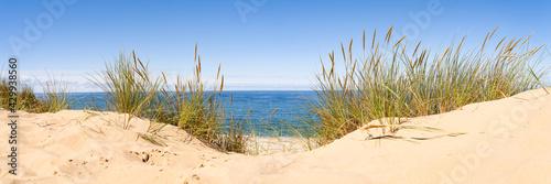 Sand dunes panorama with beach grass Fototapeta