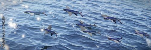 flying fish, school of Exocoetidae, background banner Fototapet