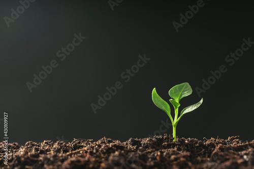 Valokuvatapetti Green seedling growing on the ground in the rain