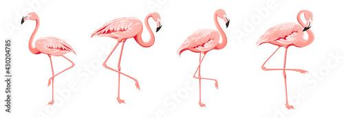Fototapeta Set of differents flamingo on white background.