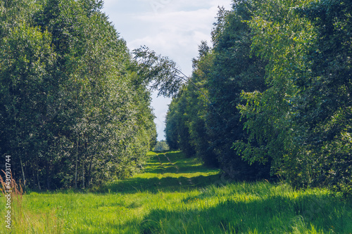 Valokuva Summer countryside road between green lush trees landscape