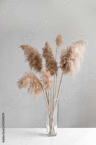 Billede på lærred Pampas grass in a glass vase near grey wall