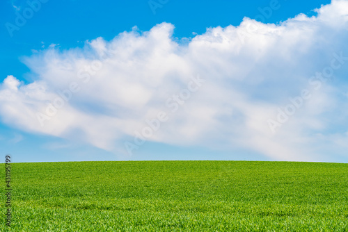 Fotografia Green meadows with blue sky and clouds background