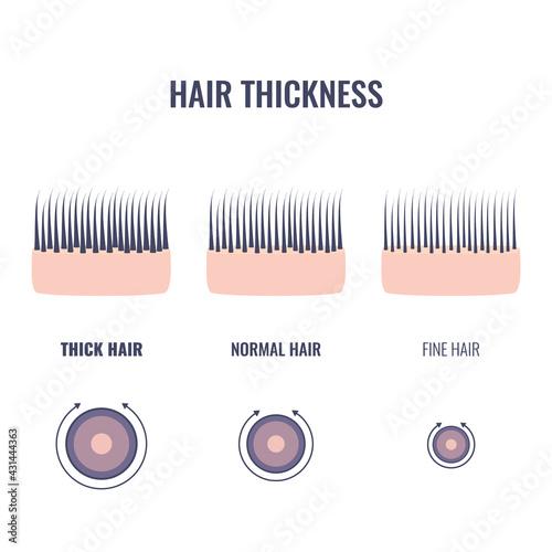 Obraz na płótnie Hair thickness types classification set