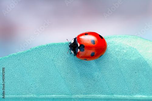 Extreme macro shots, Beautiful ladybug on flower leaf defocused background Fotobehang