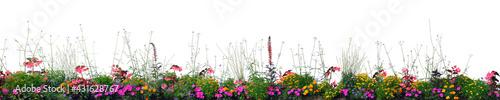 Valokuva Annual Flowers Flowerbed Panorama, Isolated Horizontal Panoramic Blooming Cardin