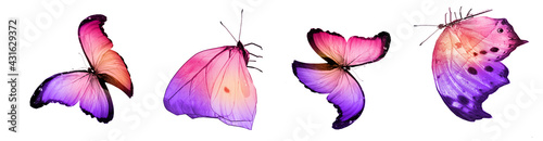 Photo Color natural and watercolor butterflies , isolated on white background