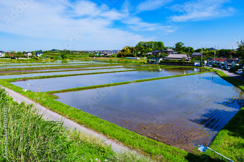 Canvas Print Landscape of Paddy field in Japan