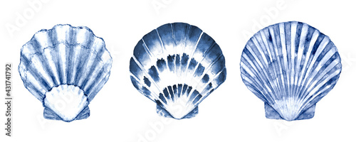 Fotografía Seashell set watercolor illustration