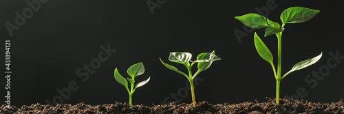 Green seedling growing on the ground in the rain Fototapeta