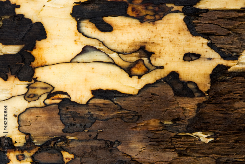 The shapes and textures of a piece of driftwood resemble that of an ancient oriental painting.