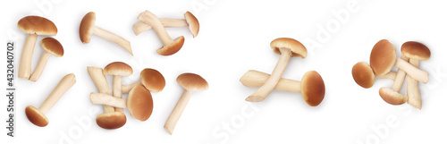 Wallpaper Mural honey fungus mushrooms isolated on white background with clipping path and full depth of field