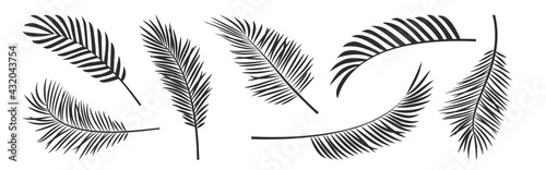 Fotografie, Tablou Palm leaf vector black silhouettes, summer branch plant jungle coconut tree, nature set icon isolated on white background