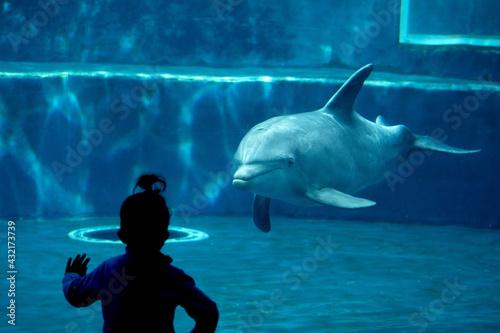 Valokuvatapetti dolphin tank in aquarium playing with humans