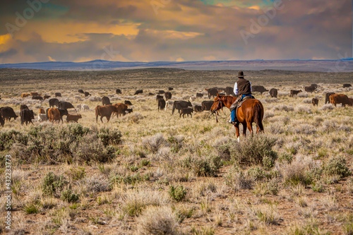 Obraz na plátne A cowboy riding through a sage brush and  desert grass pasture, moving a herd of cattle from one pasture to another