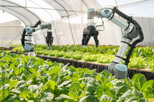 Canvastavla Smart farming agricultural technology Robotic arm harvesting hydroponic lettuce