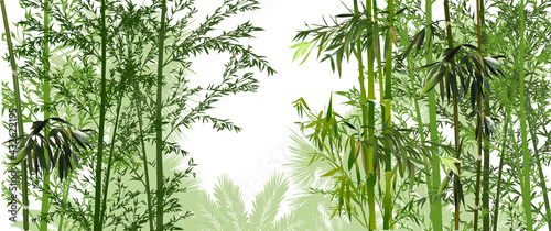 Fotografija green bamboo and palm forest on white