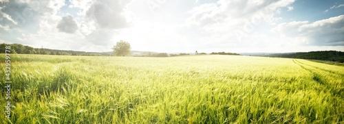 Fotografia Epic sunset sky above the green field