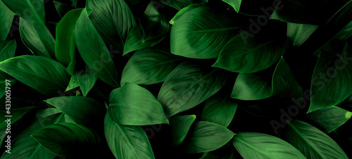 Green leaf texture,Green leaves pattern background