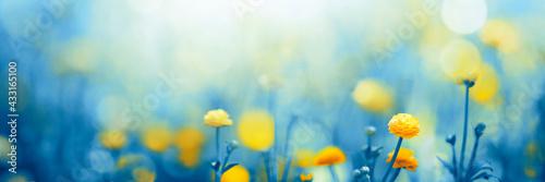 Fotografie, Obraz spring meadow with flowers