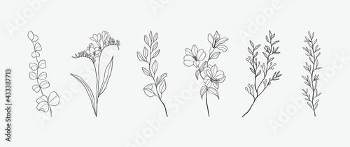 Tela Minimal botanical hand drawing design for logo and wedding invitation