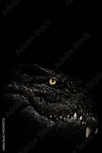 Canvas Print The cold calculating eye of a predatory reptile, a crocodile glows in the darkne