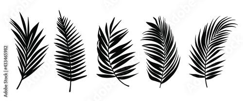 Obraz na plátně Beautiful palm tree leaf set silhouette background vector illustration